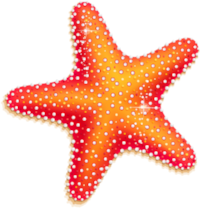 Sea Star (cropped).png