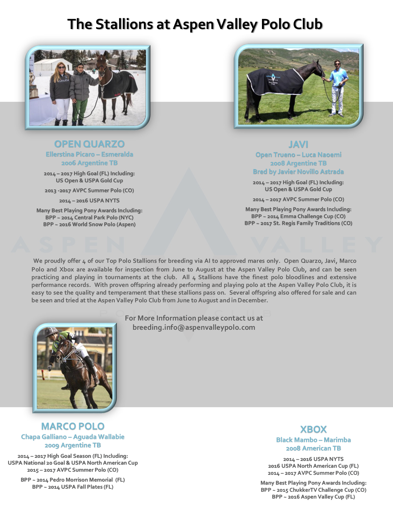 AVPC Stallions Website - Main Page.png
