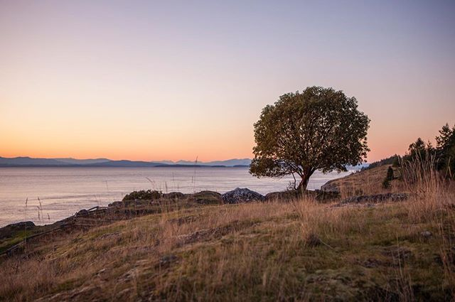 Something about lonely trees on the edge of a cliff at sunset... ---------------------------------------- #seattle #seattlephotographer #seattlelife #sunset #epic_captures #ig_shotz #canon_photos #canon_official #canon5dmarkiv #teamcanon #igers_seattle #pnw #pacificnorthwest #pnwcollective #pnwonderland #landscape #beautiful #nofilter #seattlepulse #visitseattle #canonfanphoto #westcoast_exposures  #sanjuanislands #seattlepipeline #sanjuanisland  #fridayharbor
