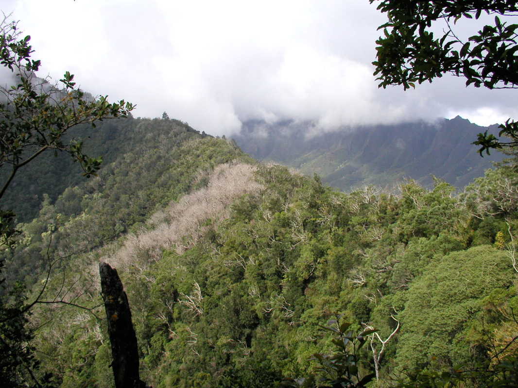 Kumaipo Ridge burn area in 2004 with Makaha Valley in the background