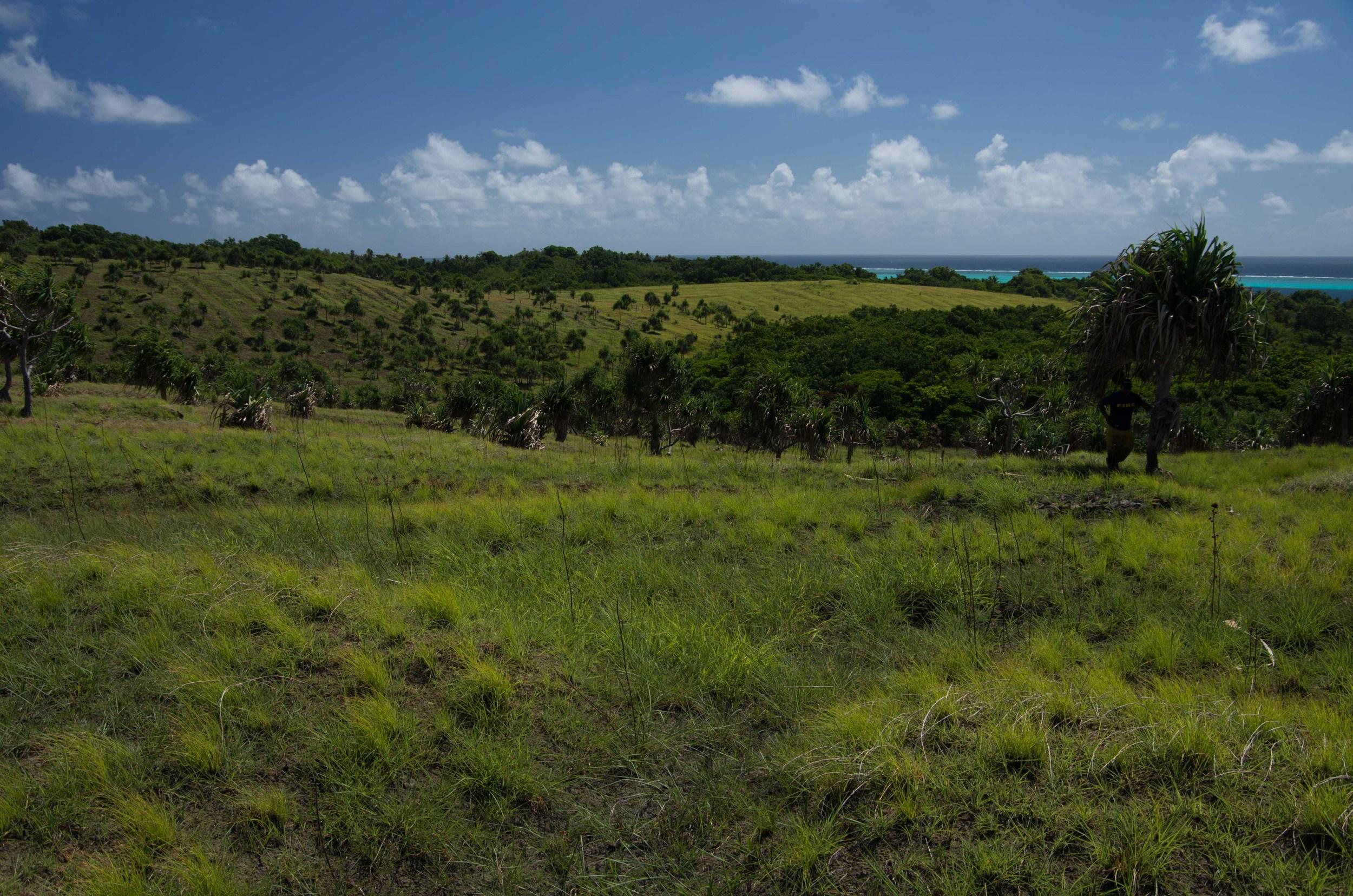 savanna-forest mosaic on Yap