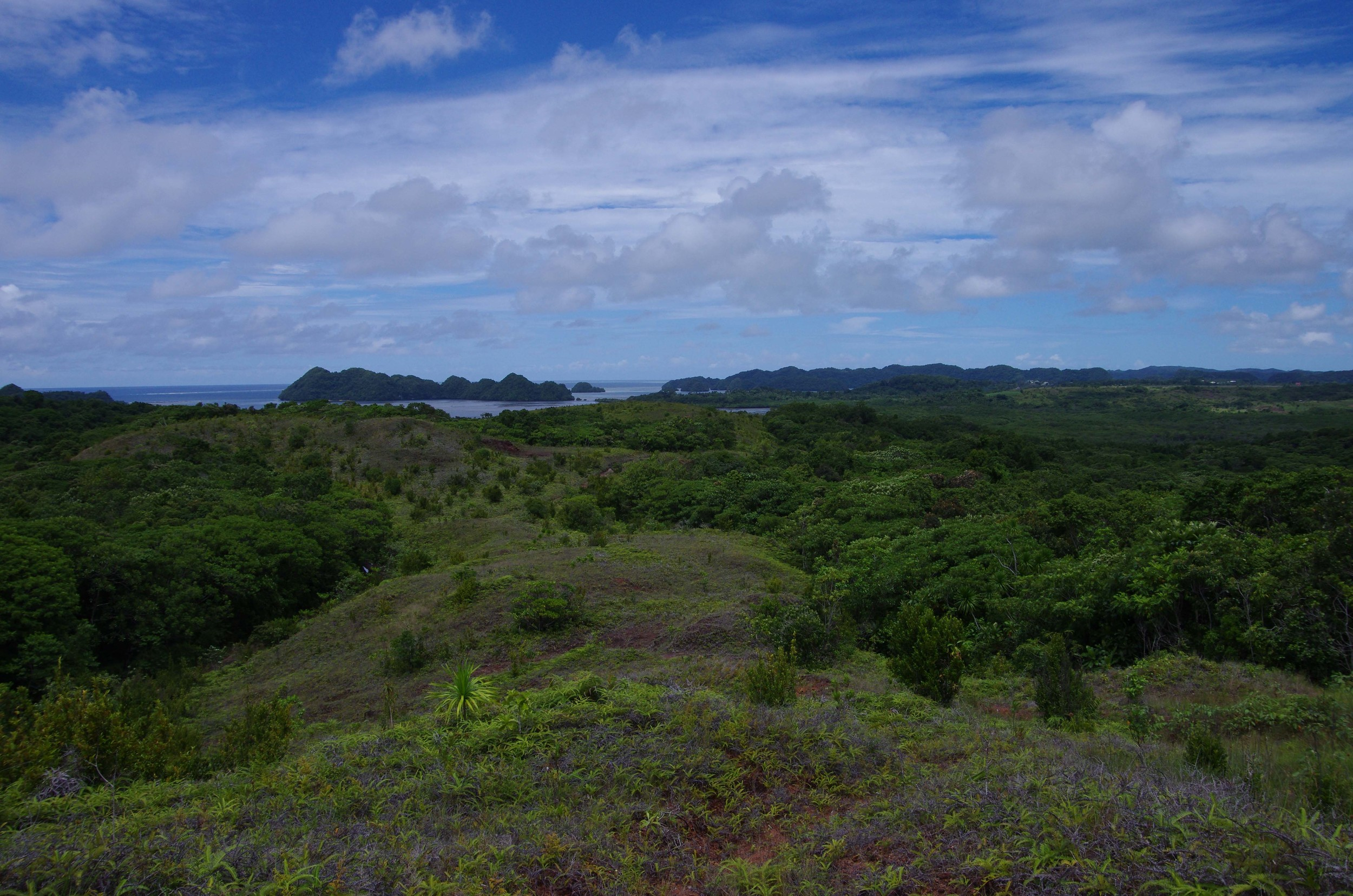 Savanna-Forest mosaic on Babeldaob island, palau