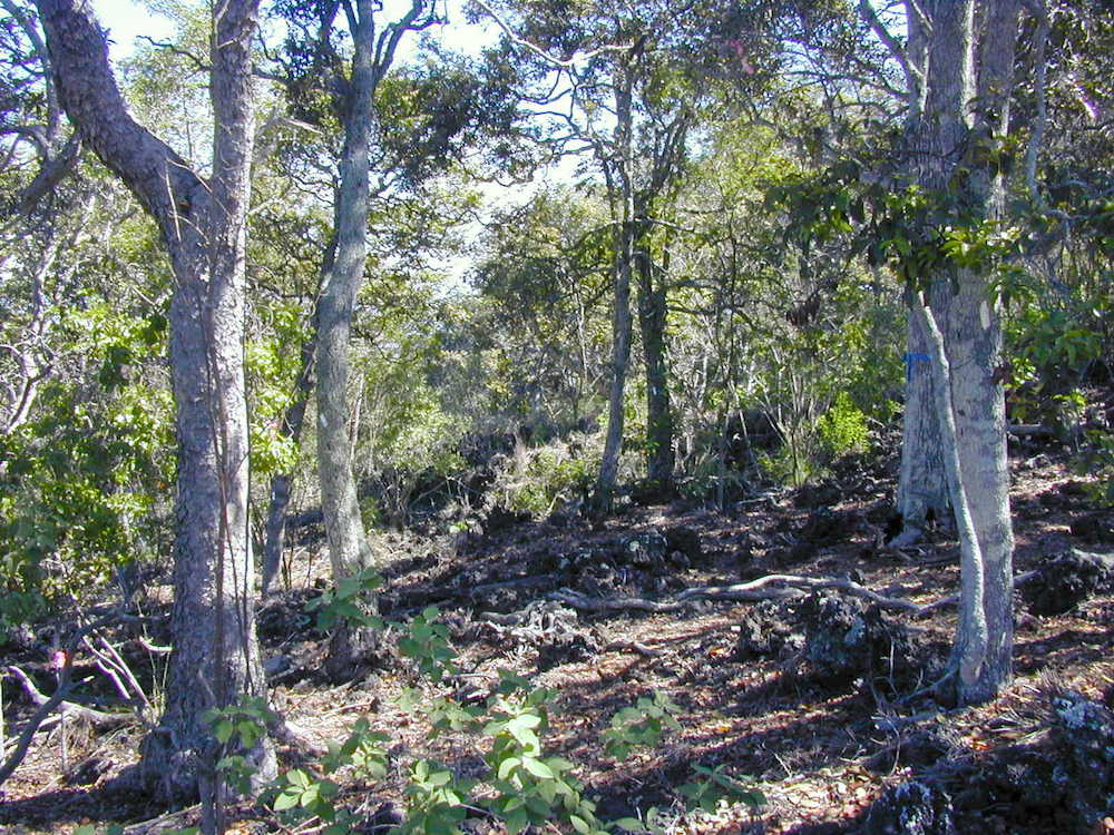 A shady spot in the dry forest. Photo: Susan Cordell