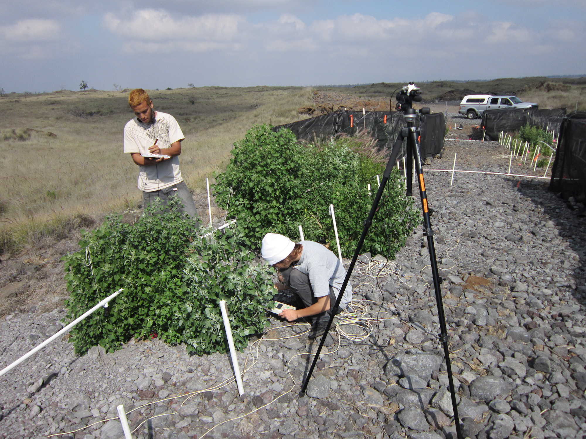 Researchers record observations of the experimental greenstrip plots. Photo: Susan Cordell
