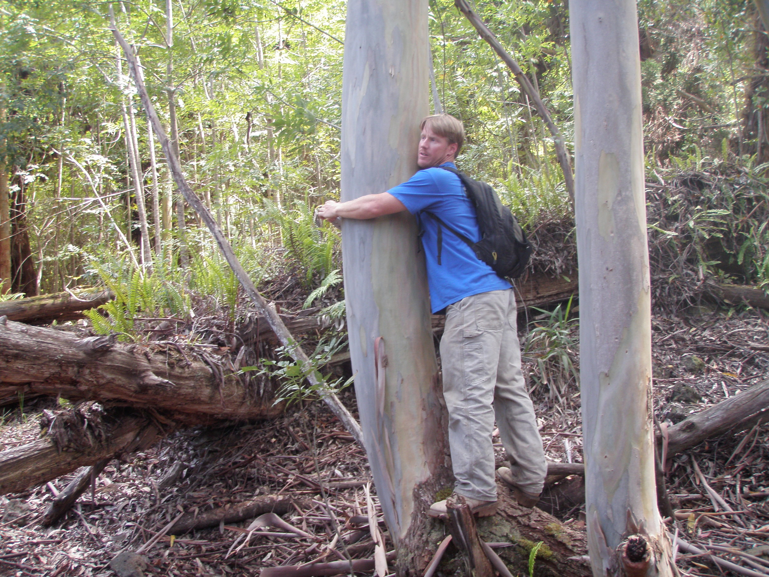 Hugging the trees: measuring the diameter of a eucaplytus. Photo: Willie Rice.