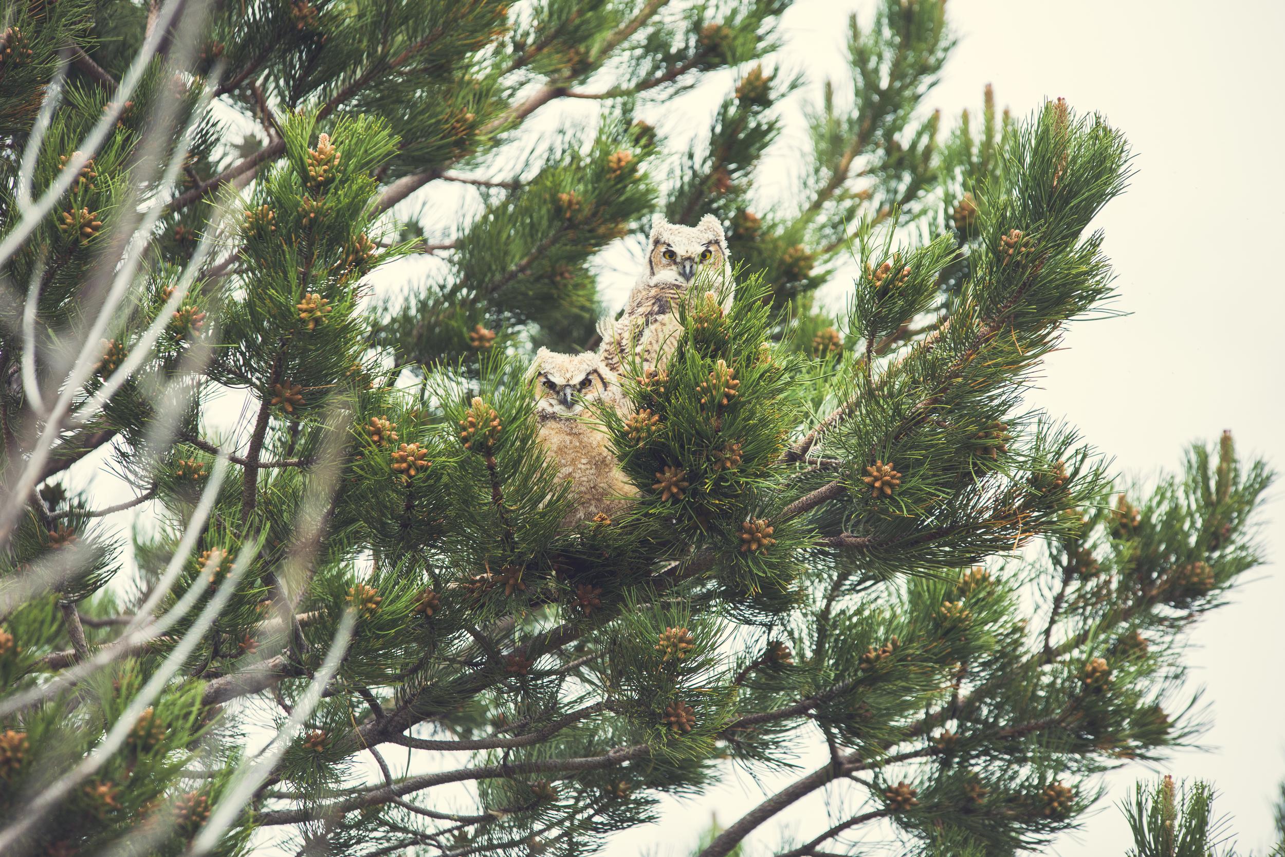 owl-9716.jpg