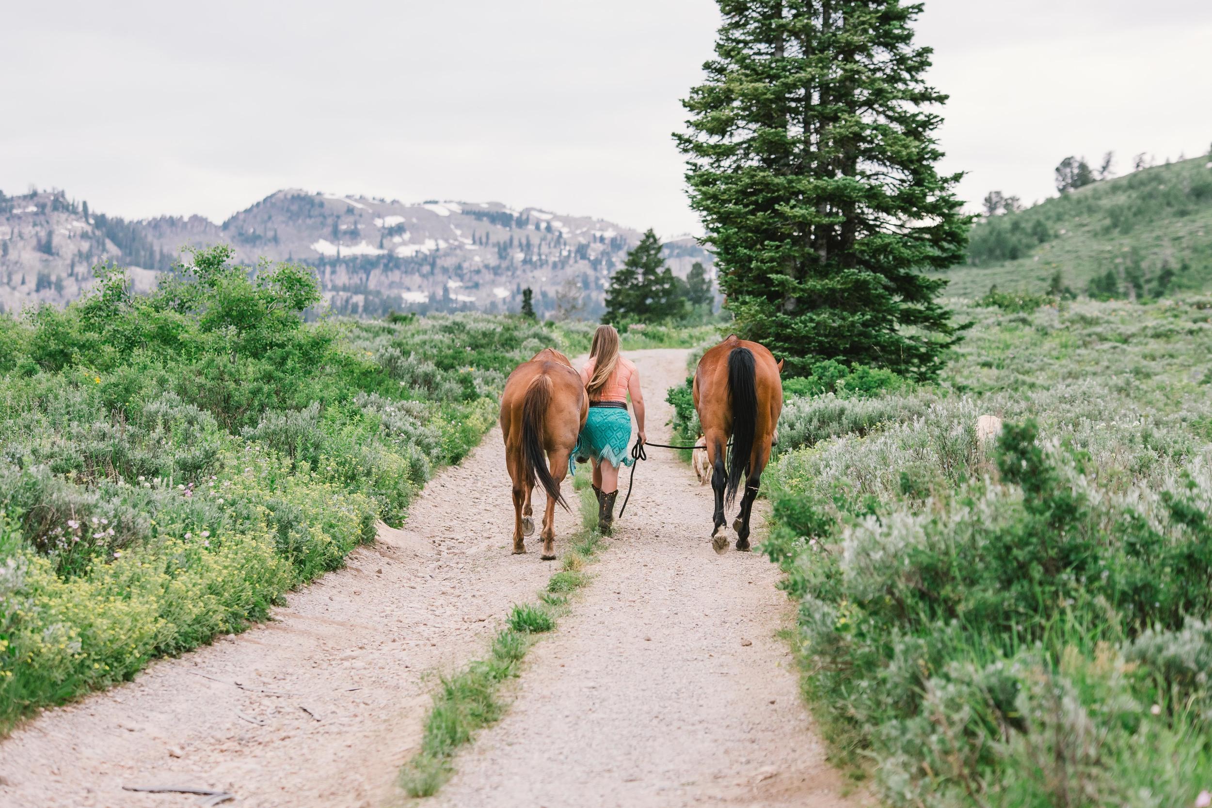 Tony Grove horse photography-6927.jpg