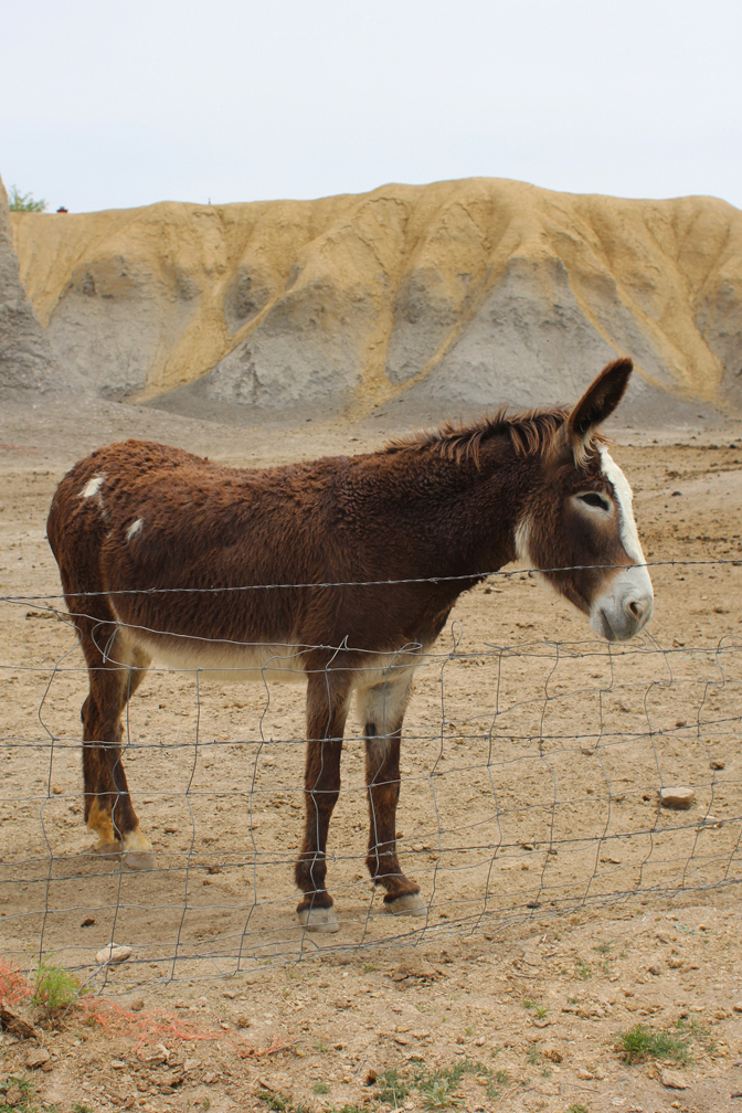 A little family of donkeys smiled at us as we drove toTerlingua Ghost Town. This was the baby.