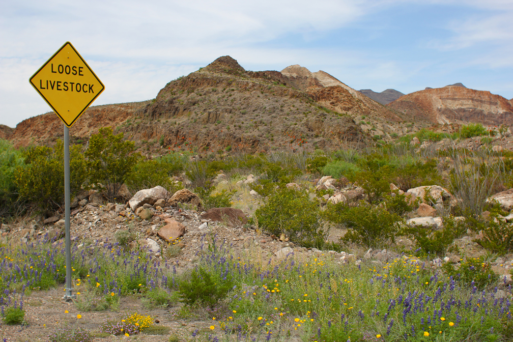 We saw more of these signs than speed limit signs. And hardly any other cars. Lots and lots of cattle, though.