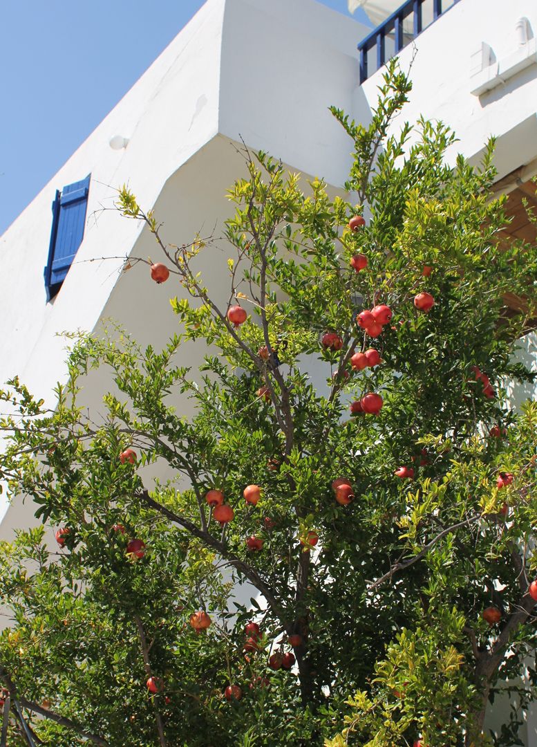 In such a bright and colorful and cheerful place, the giant, ruby pomegranates hanging from the trees that grew out of the beach added even more charm and whimsy.