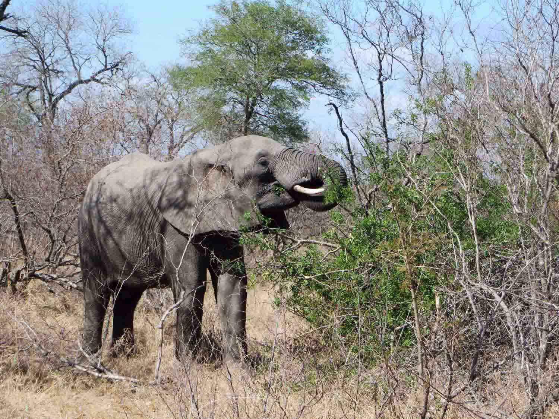 Elephant-Klaserie-Reserve-South-Africa