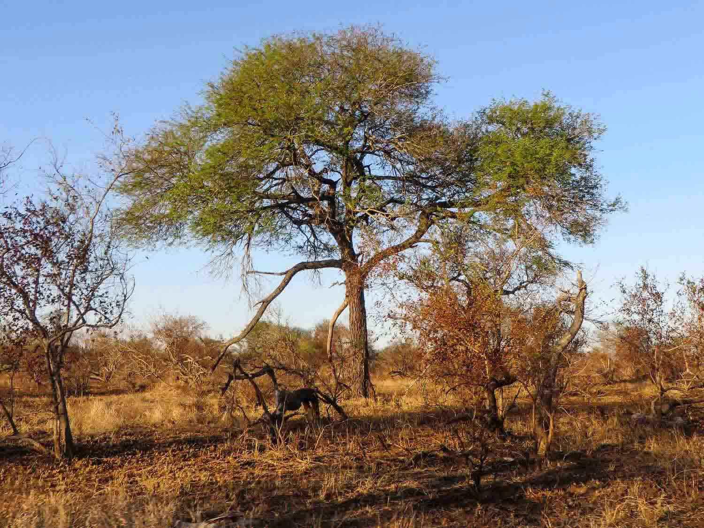 Gomo-Gomo-South-Africa