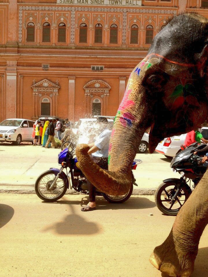 2012: An elephant spurts water from its trunk while walking down the street in Jaipur, India.