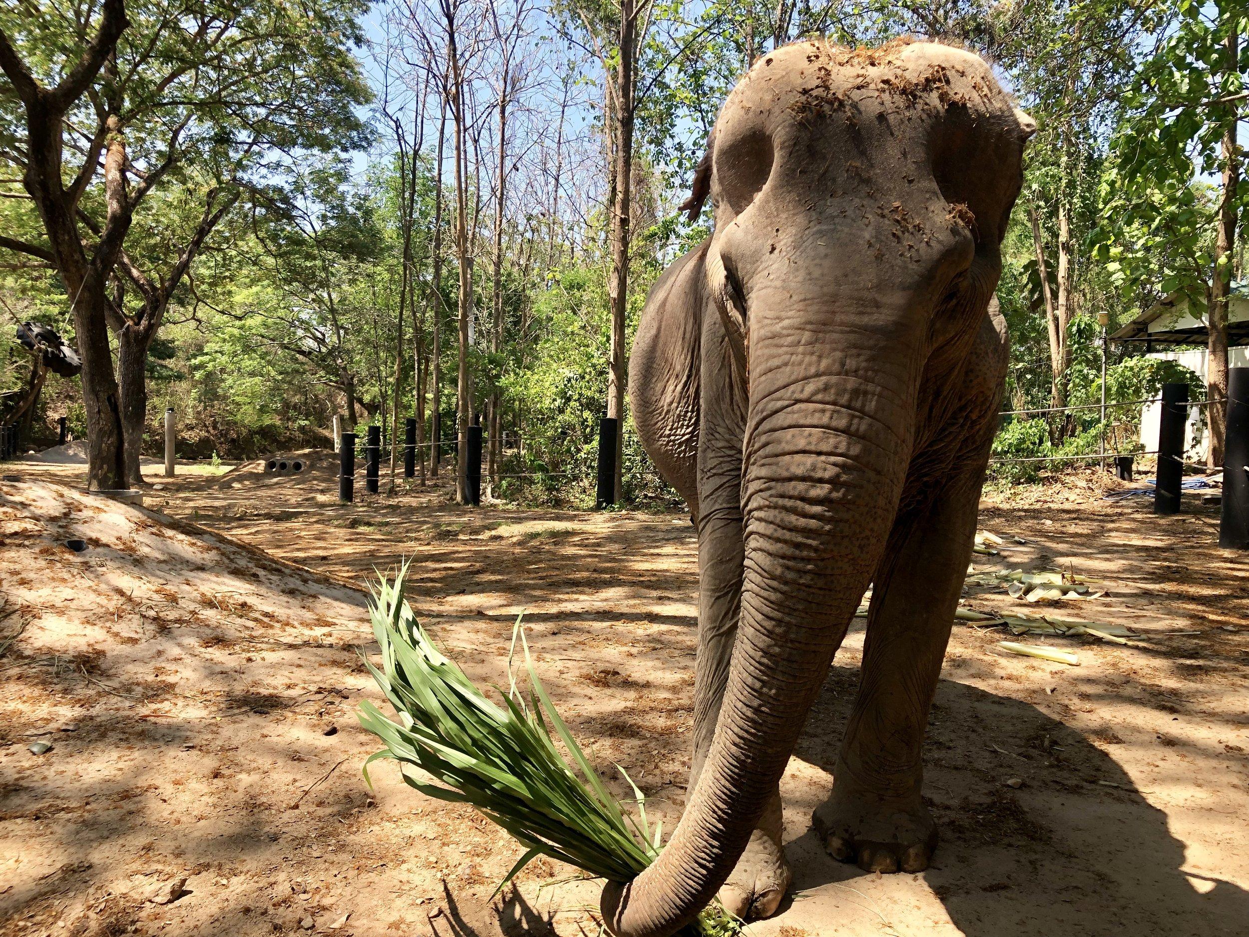 Wildlife Friends Foundation Thailand