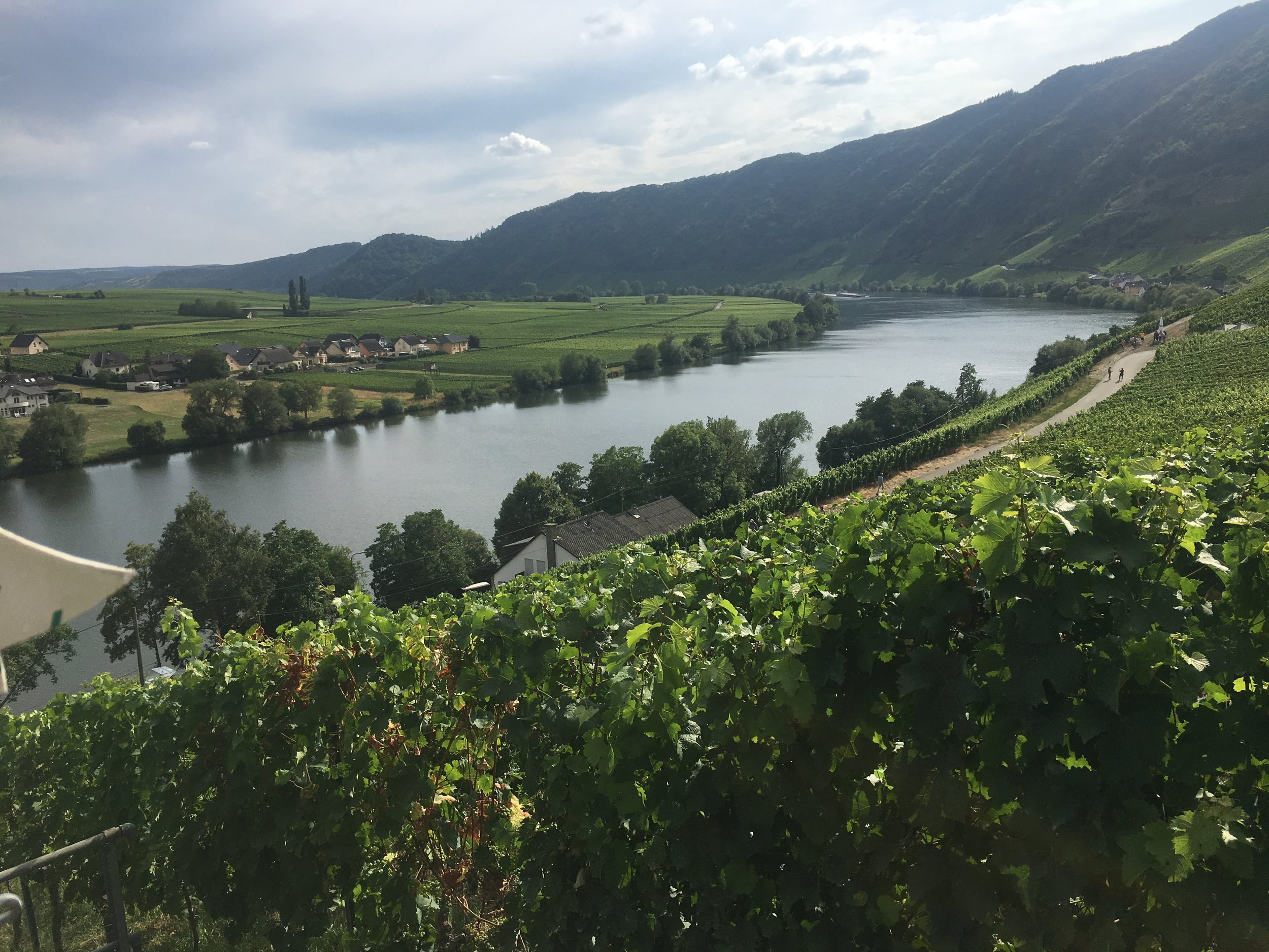 In the vineyards of piesport