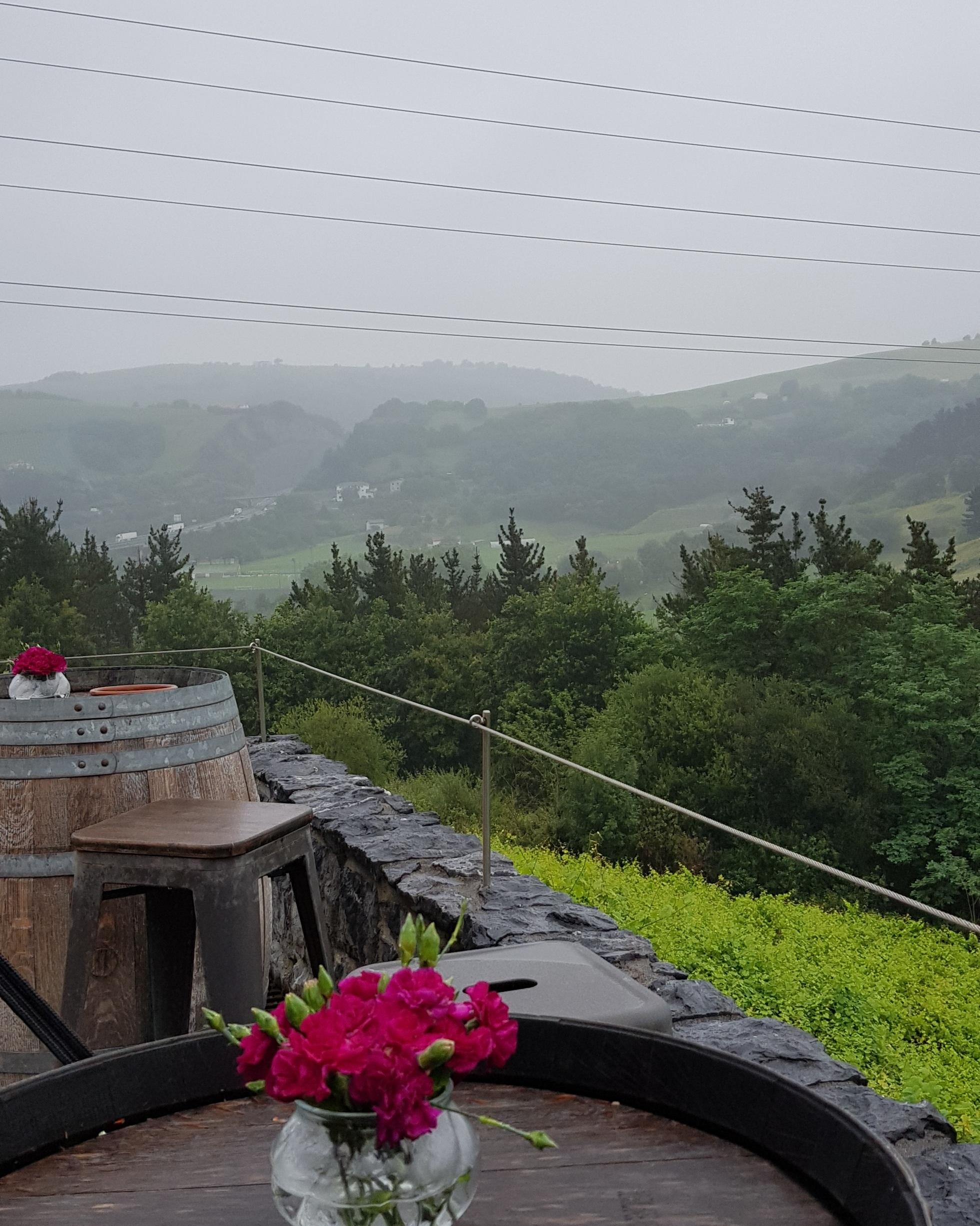 Overlooking the vines from Bodega Rezebal's terrace