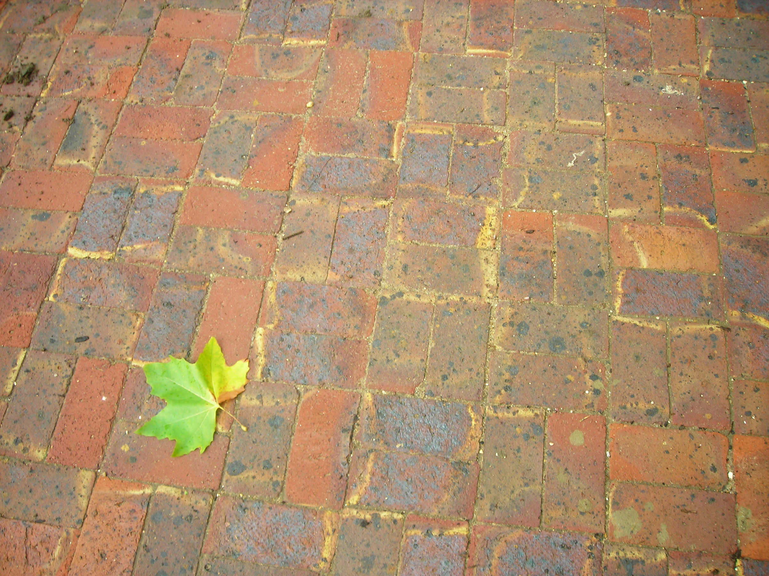 permiable paving - exhibition house.JPG