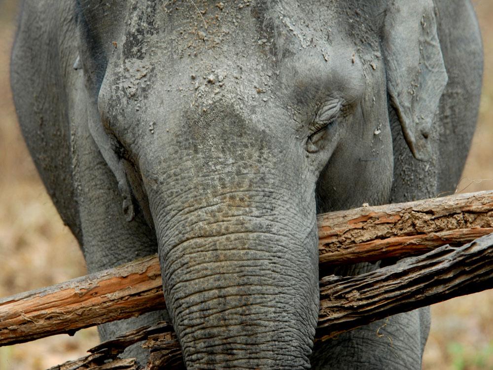 012 elephant.jpg