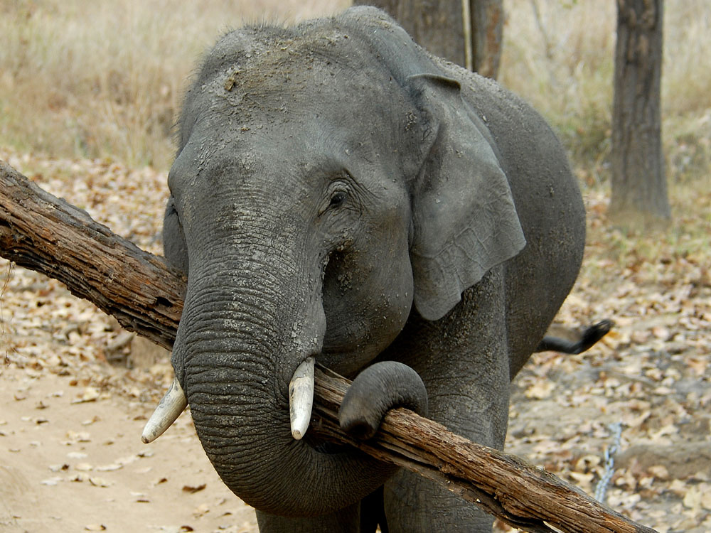 050 elephant.jpg