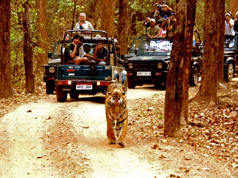 059 tigers & tourists.jpg