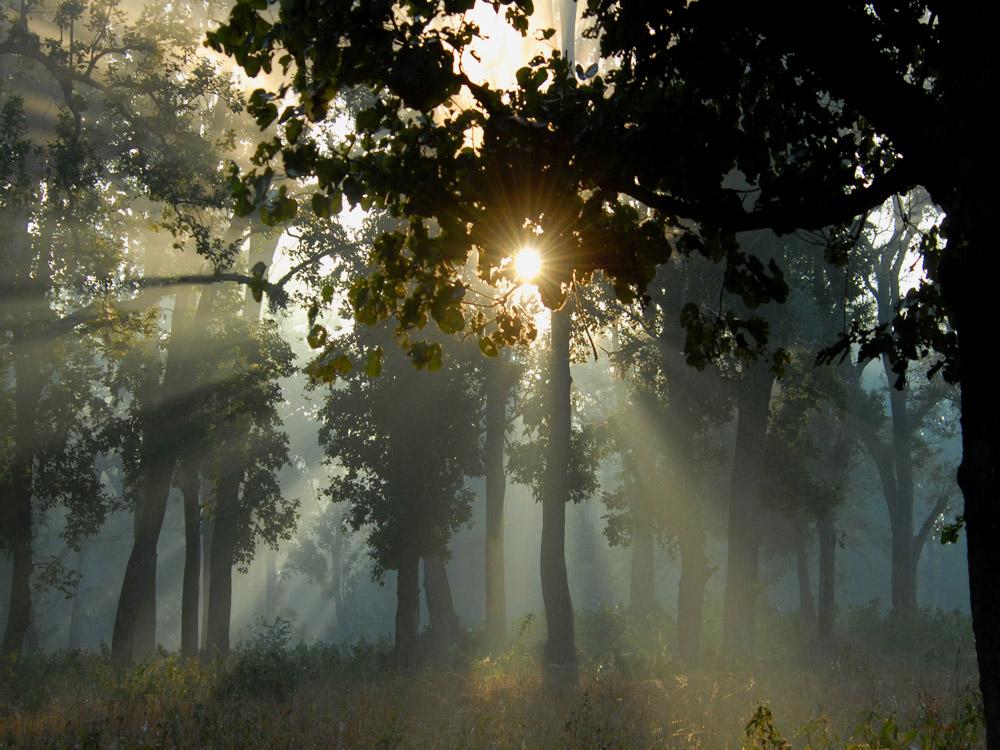 039 sun rays.jpg