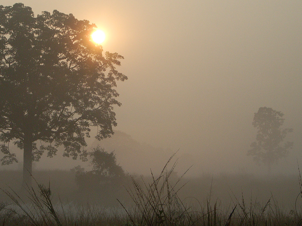 060 sunrise over forest fog.jpg
