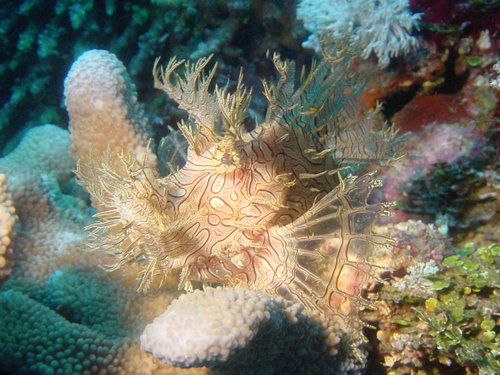 067 rhinopias - papua new guinea.jpg