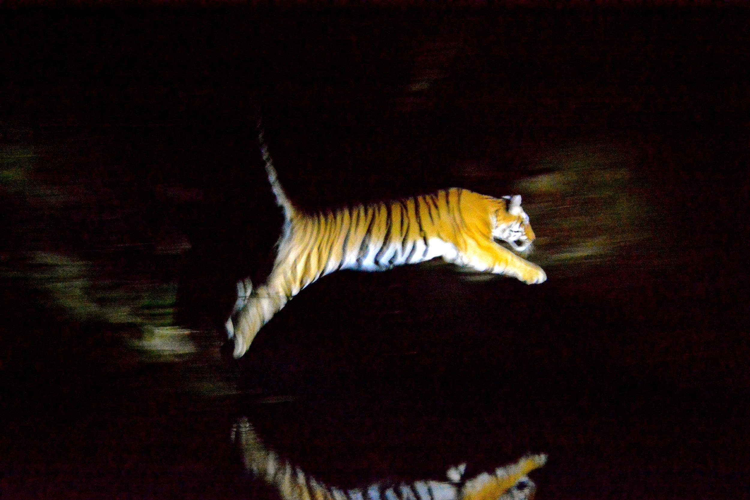 DSC_3536 Night Of The Tiger 2.jpg