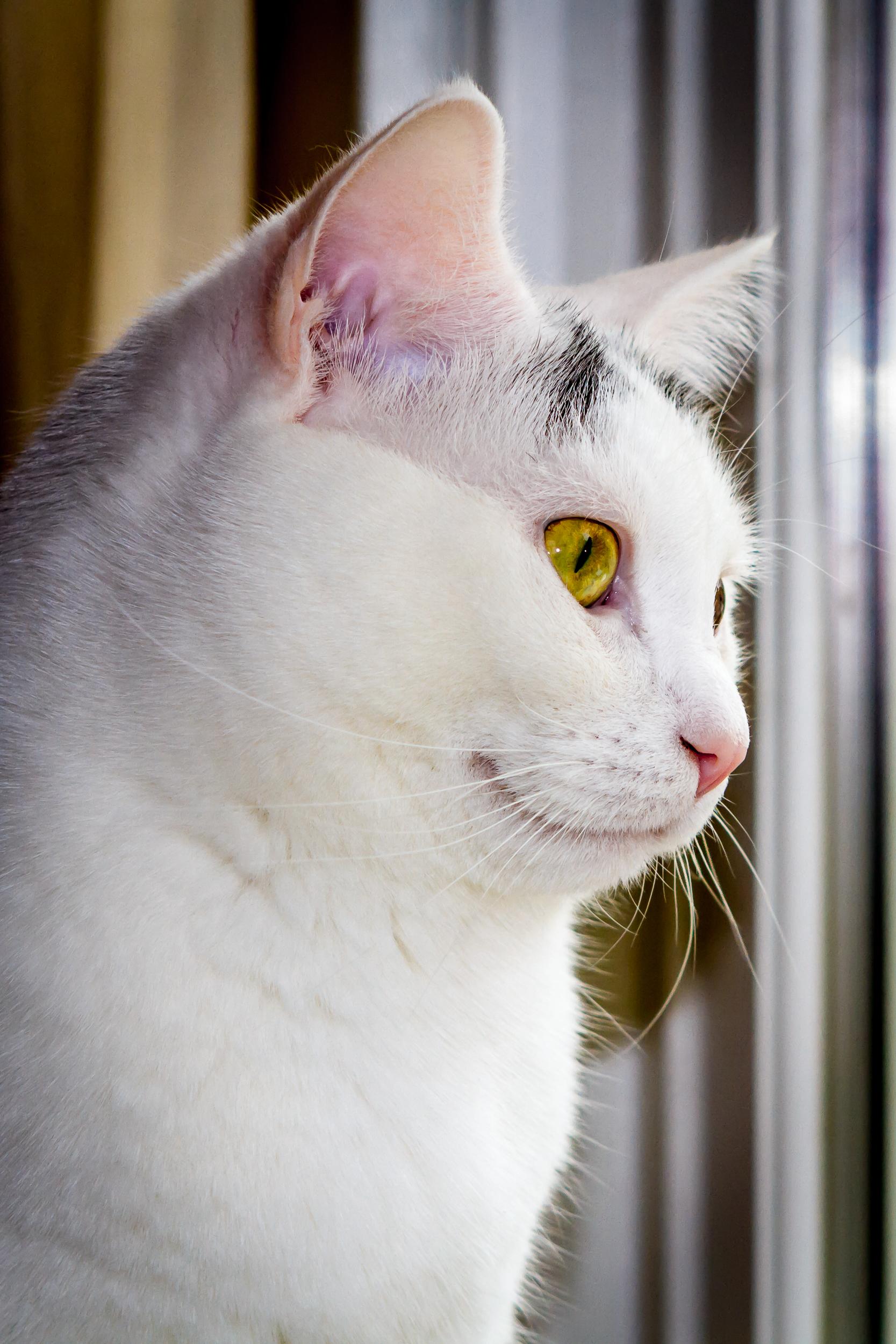 Juan At The Window