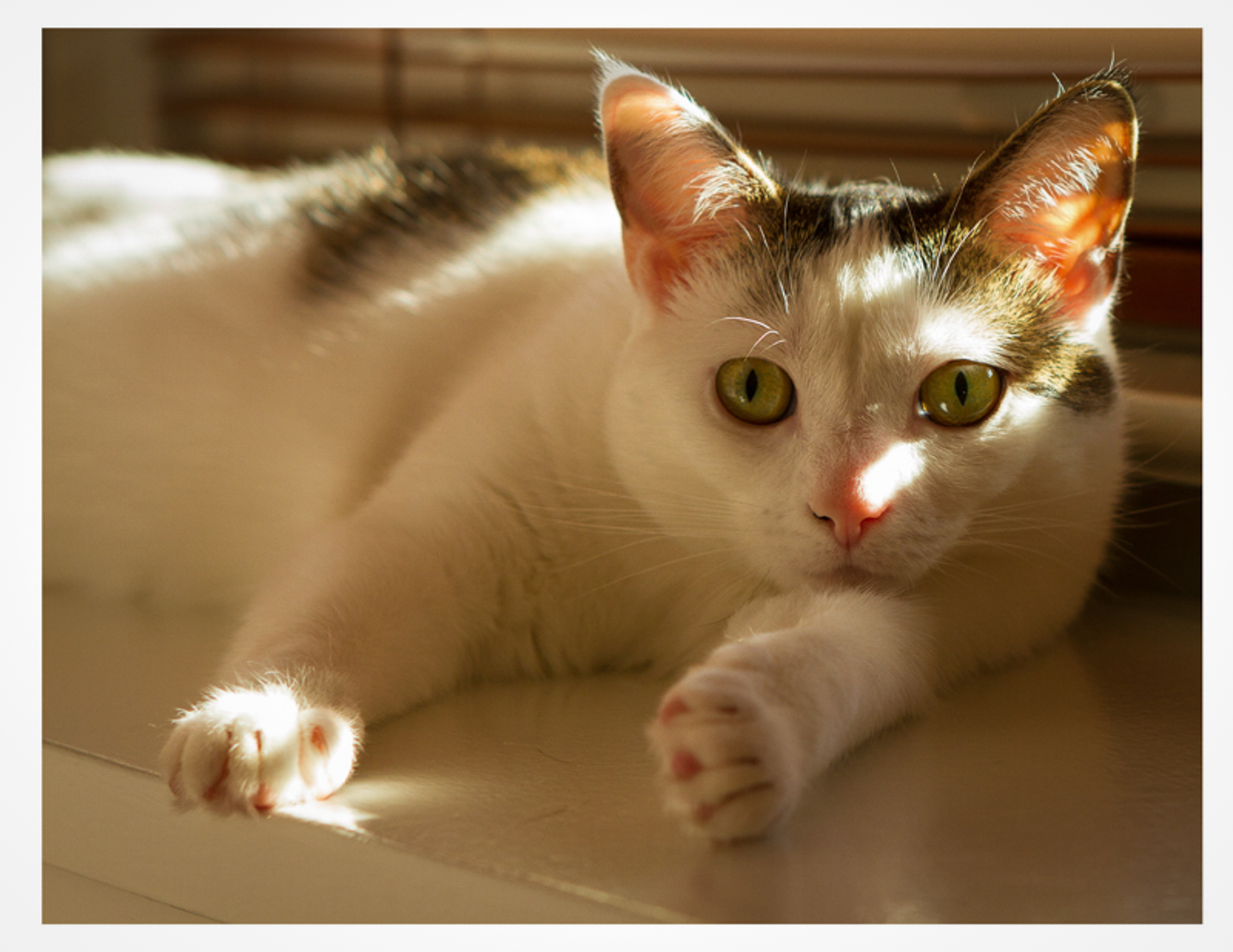 Lola In The Light