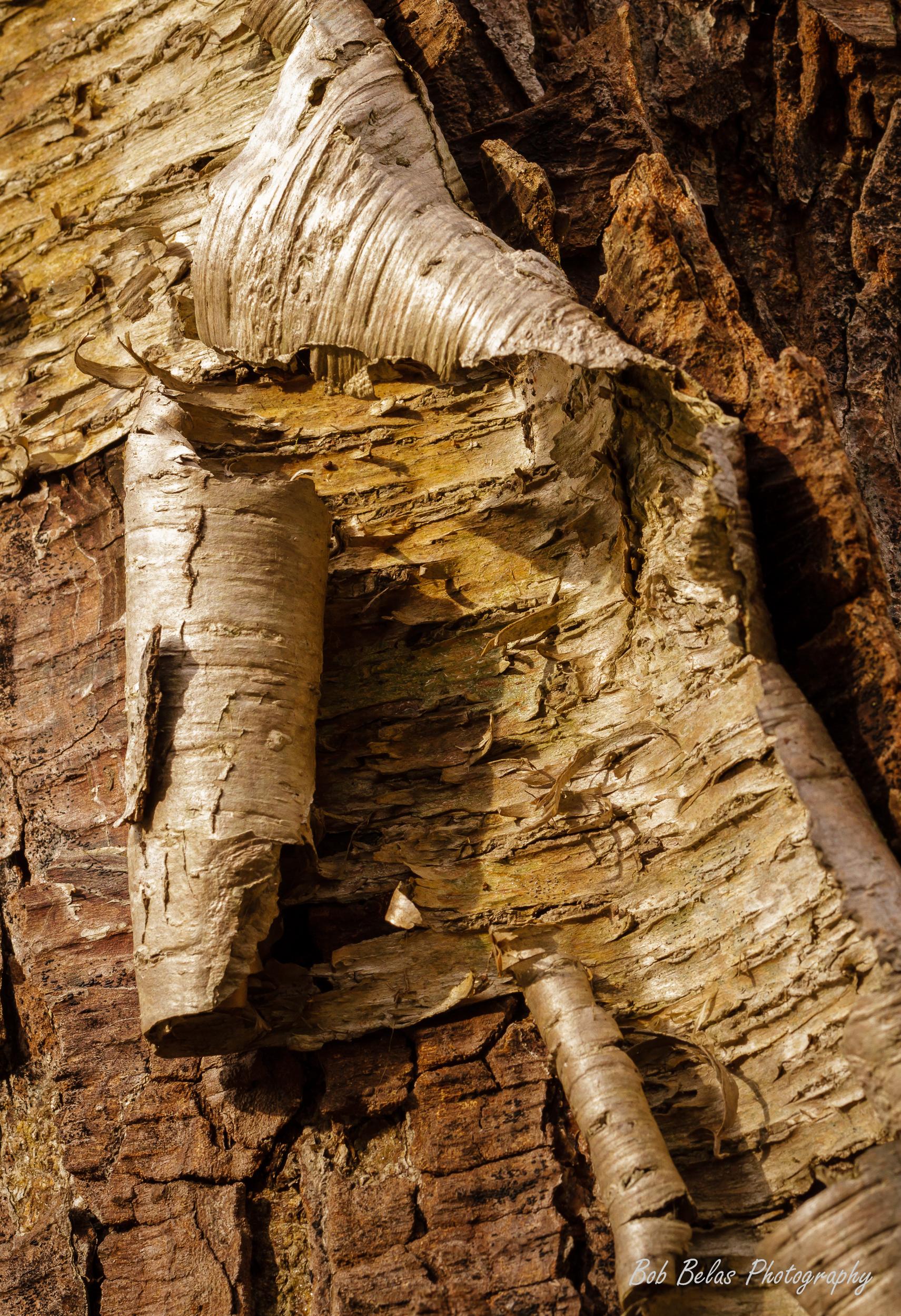 Coils of Bark