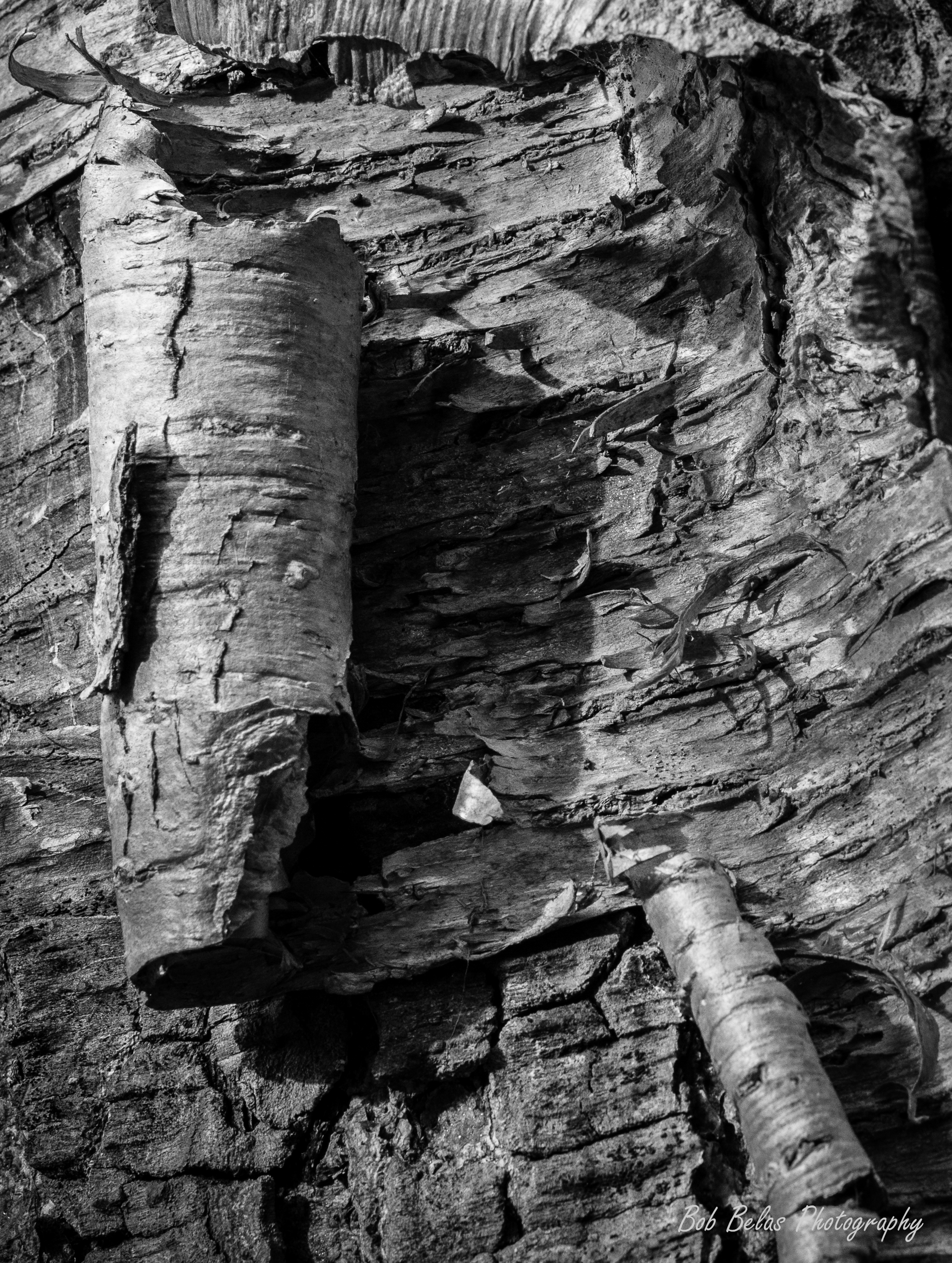 Bark Coils in Black and White