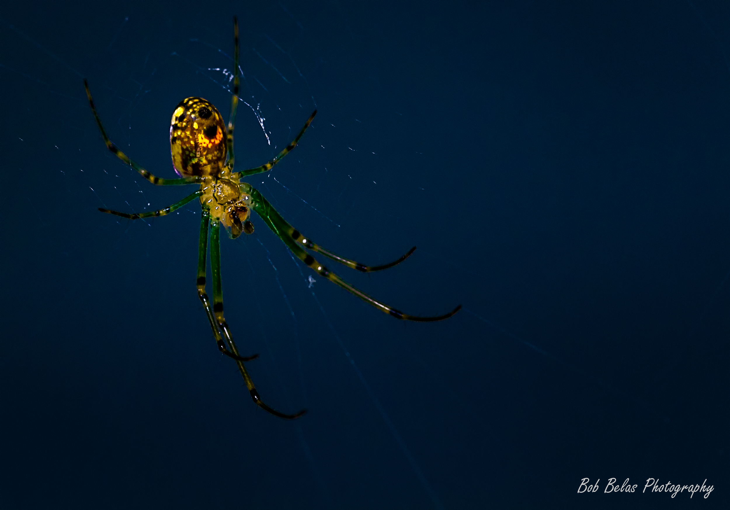 Glowing Spider 3, color