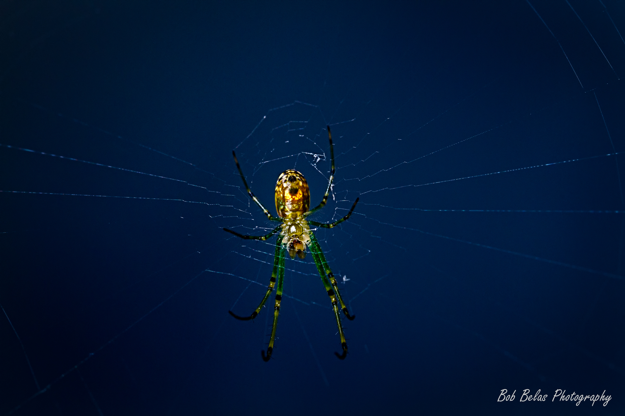 Glowing spider 1, color