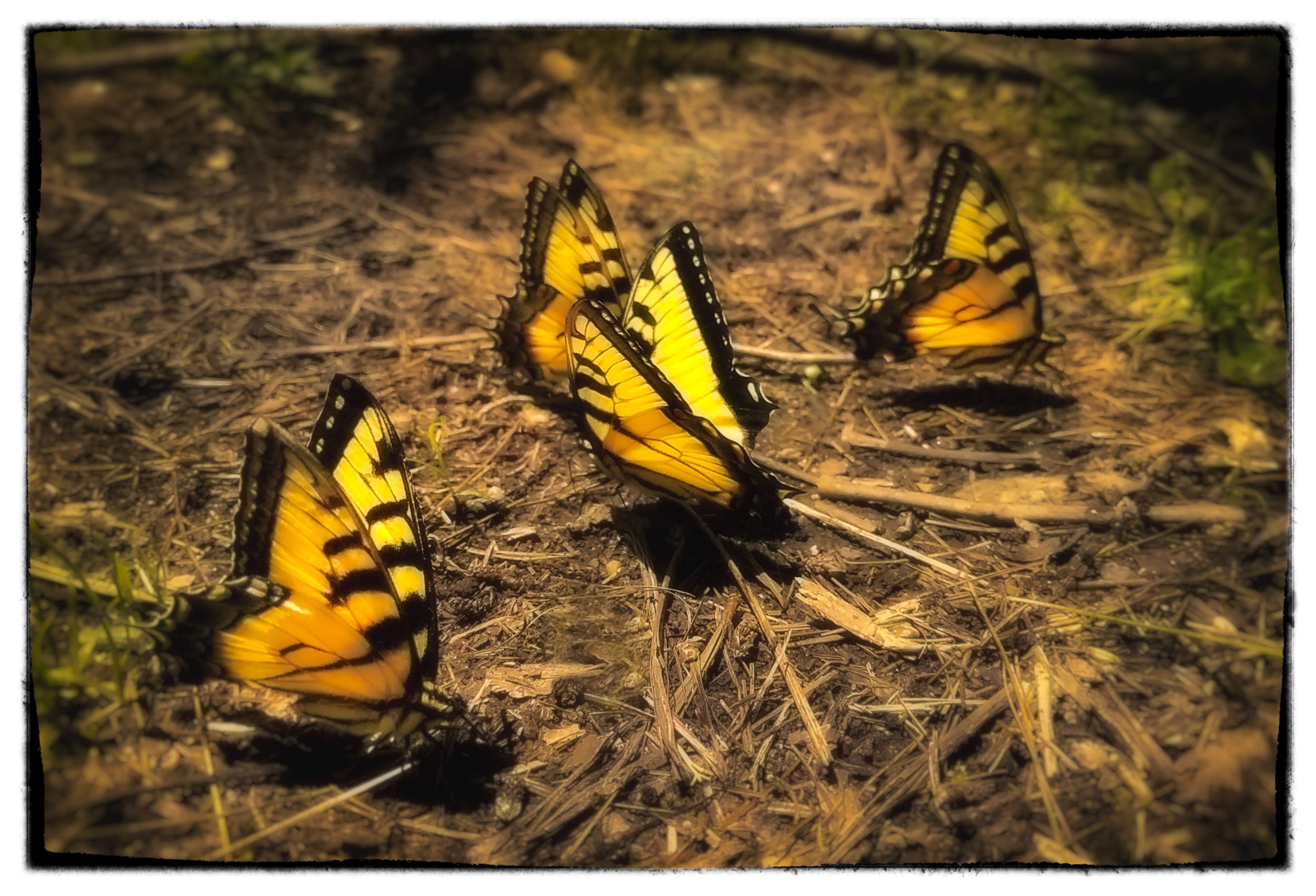 Illuminated Butterflies