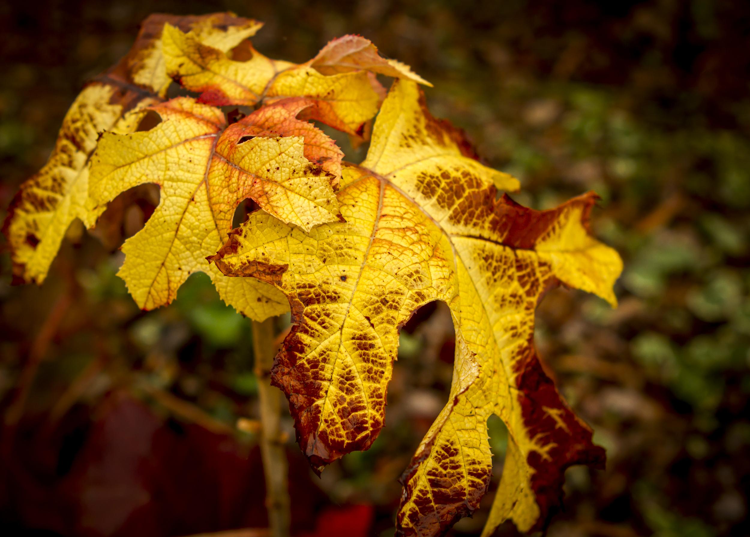 Fall's Paintbrush