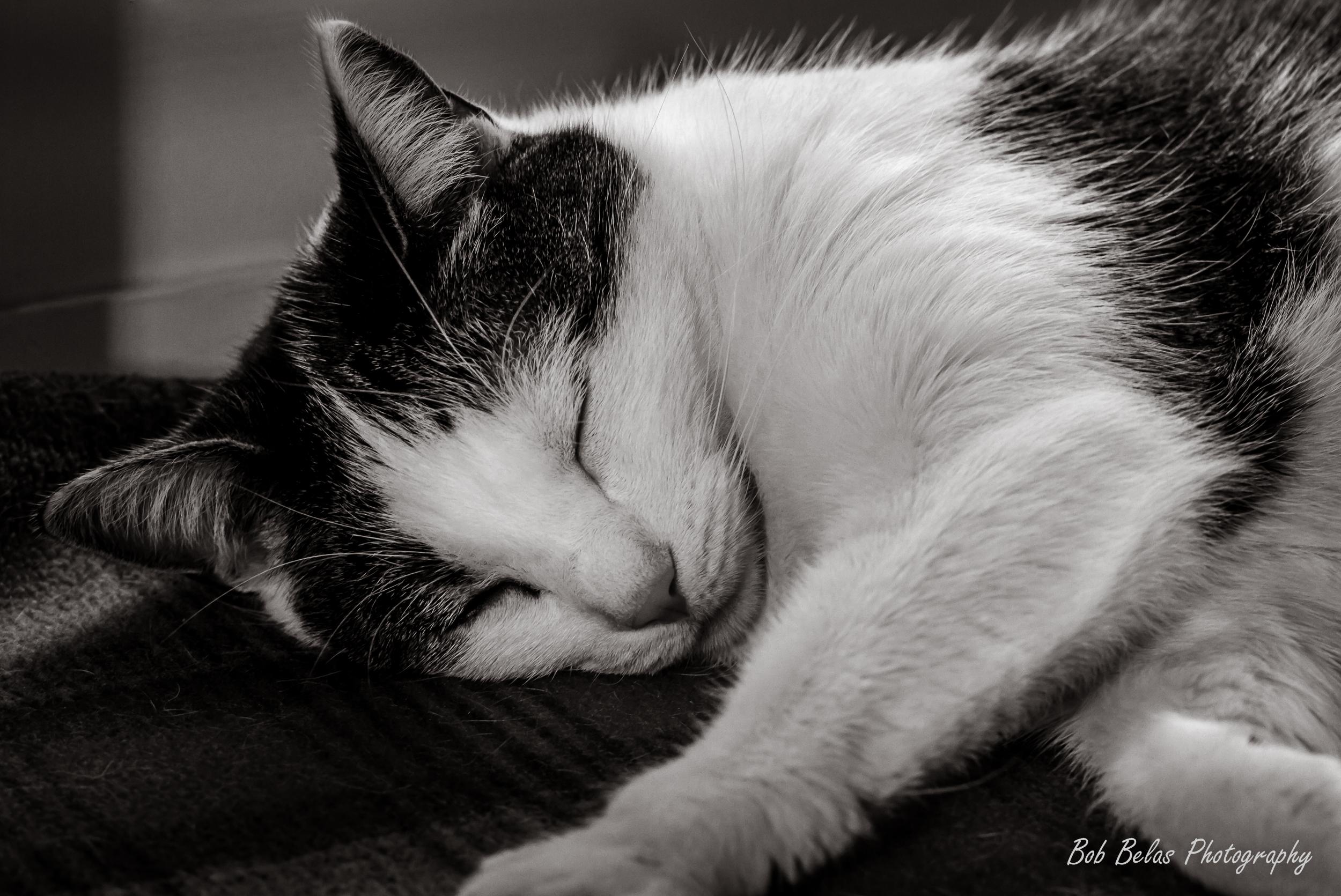 Sleepin'