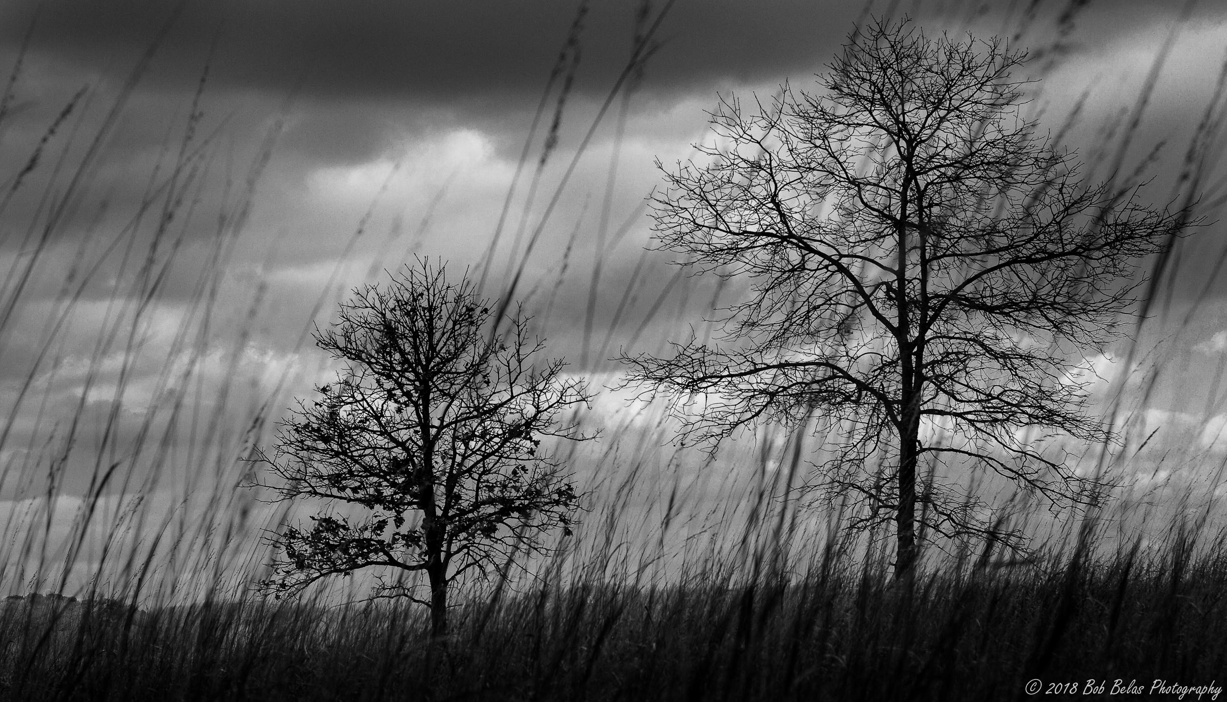 Serpentine Grassland 2, b/w