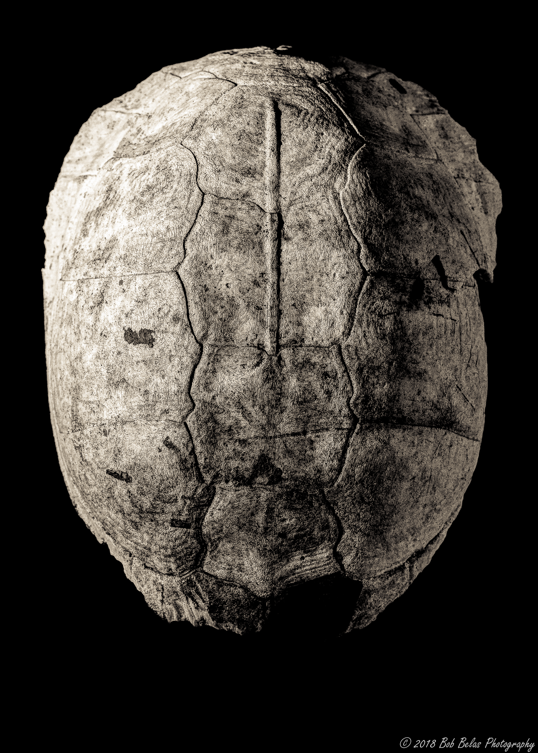 Turtle Shell, monochrome