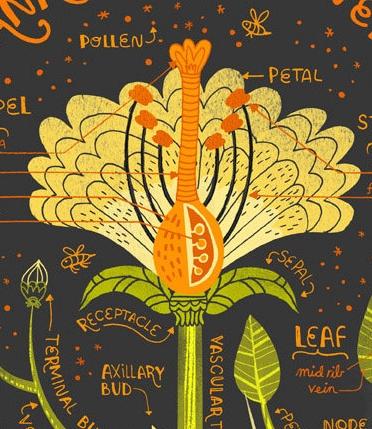PLANT ANTOMY