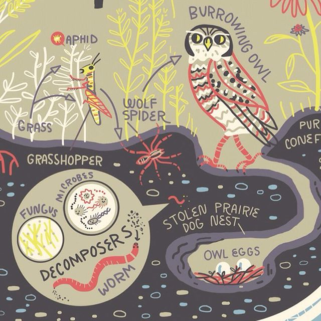 Another close up from my Great Plains ecosystem  illustration.  Never forget the bacteria! 🌎🌍🌏Preorder link to get Wondrous Workings of Planet Earth book for yourself in profile.  #ecology #bacteria #soilhealth #scientificillustration #protectourplanet #planetearth