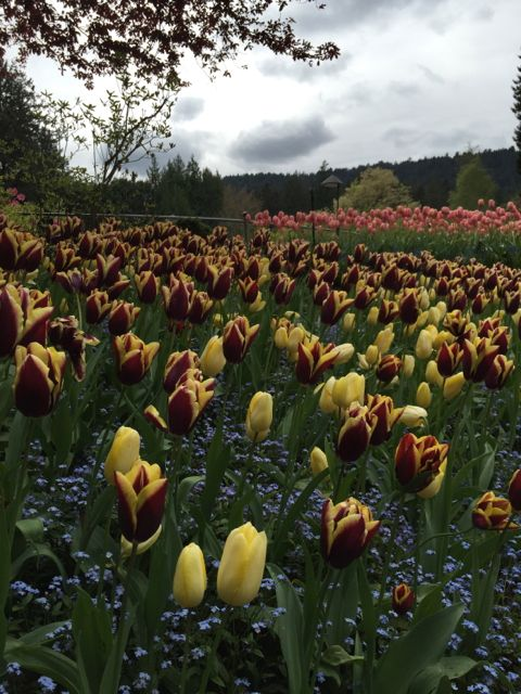 Above: A view of Butchart Gardens on Vancouver Island