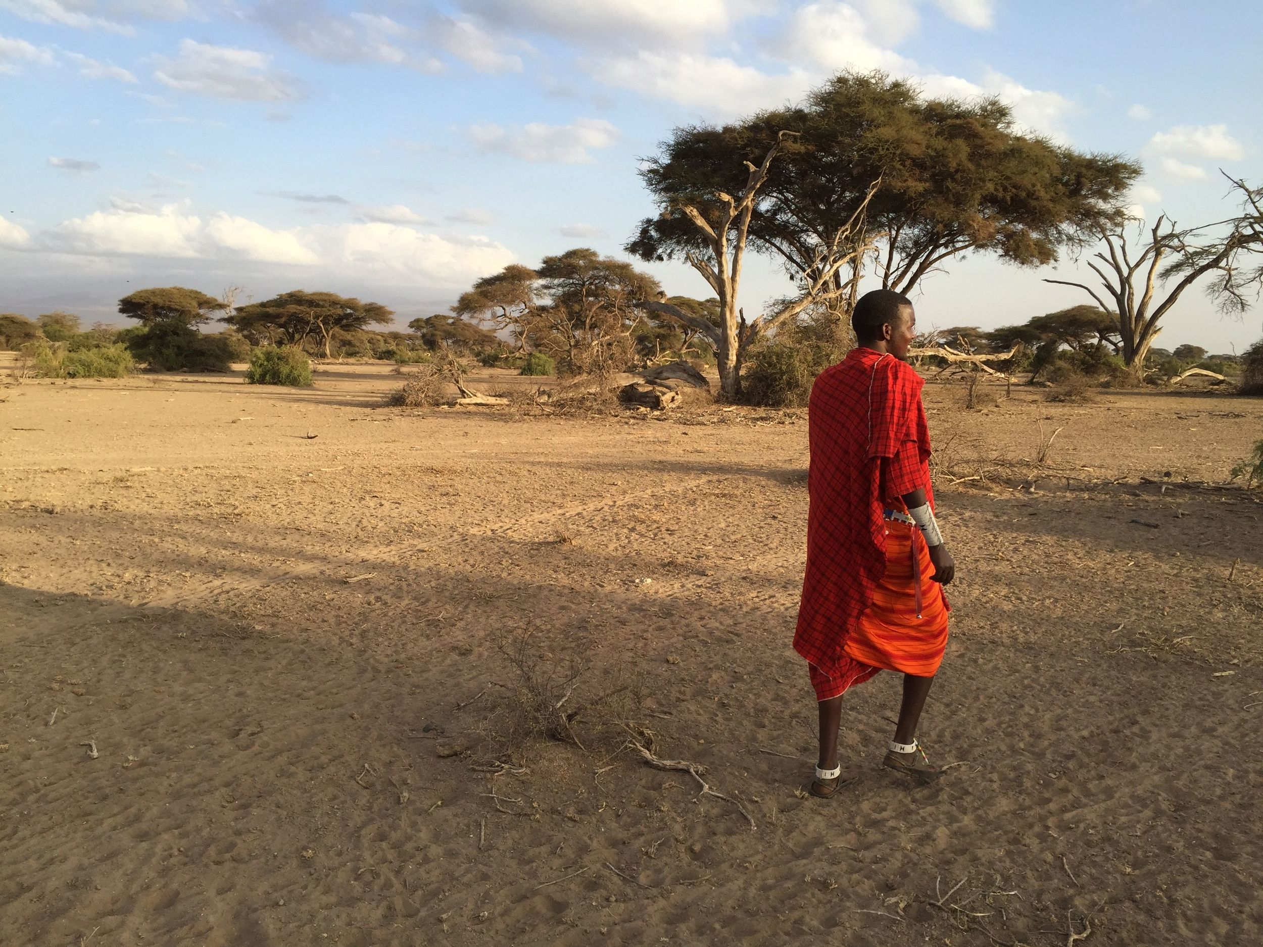 William. a Masai tribesman, leads our group on a walking safari in game reserve in the foothills of Kilimanjaro. The nomadic Masai tribes live in the game reserves, where they herd cattle and goats. The Masai don't hunt wild animals, but they live among them.