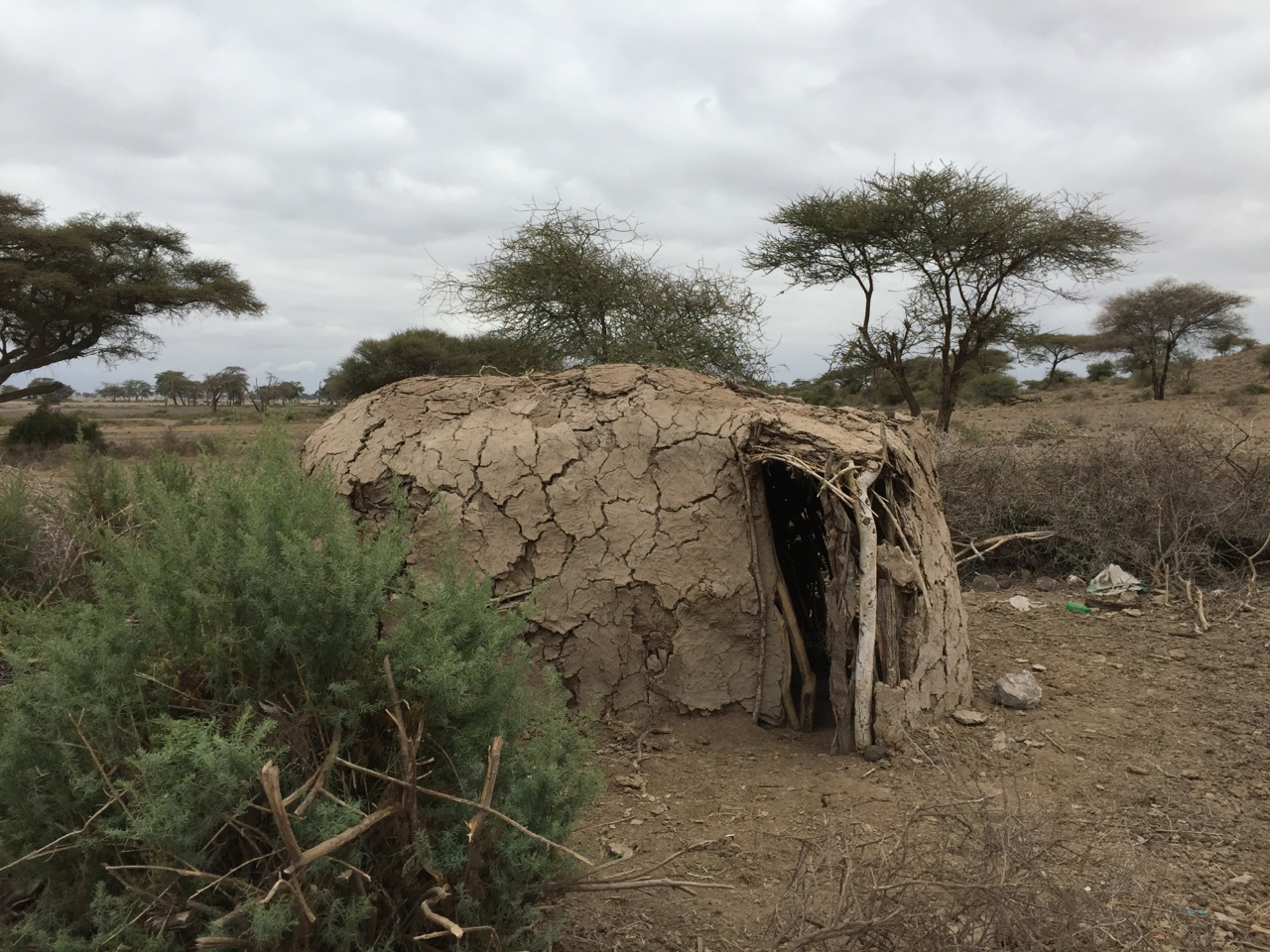 A Masai hut in the Kilimanjaro foothills.