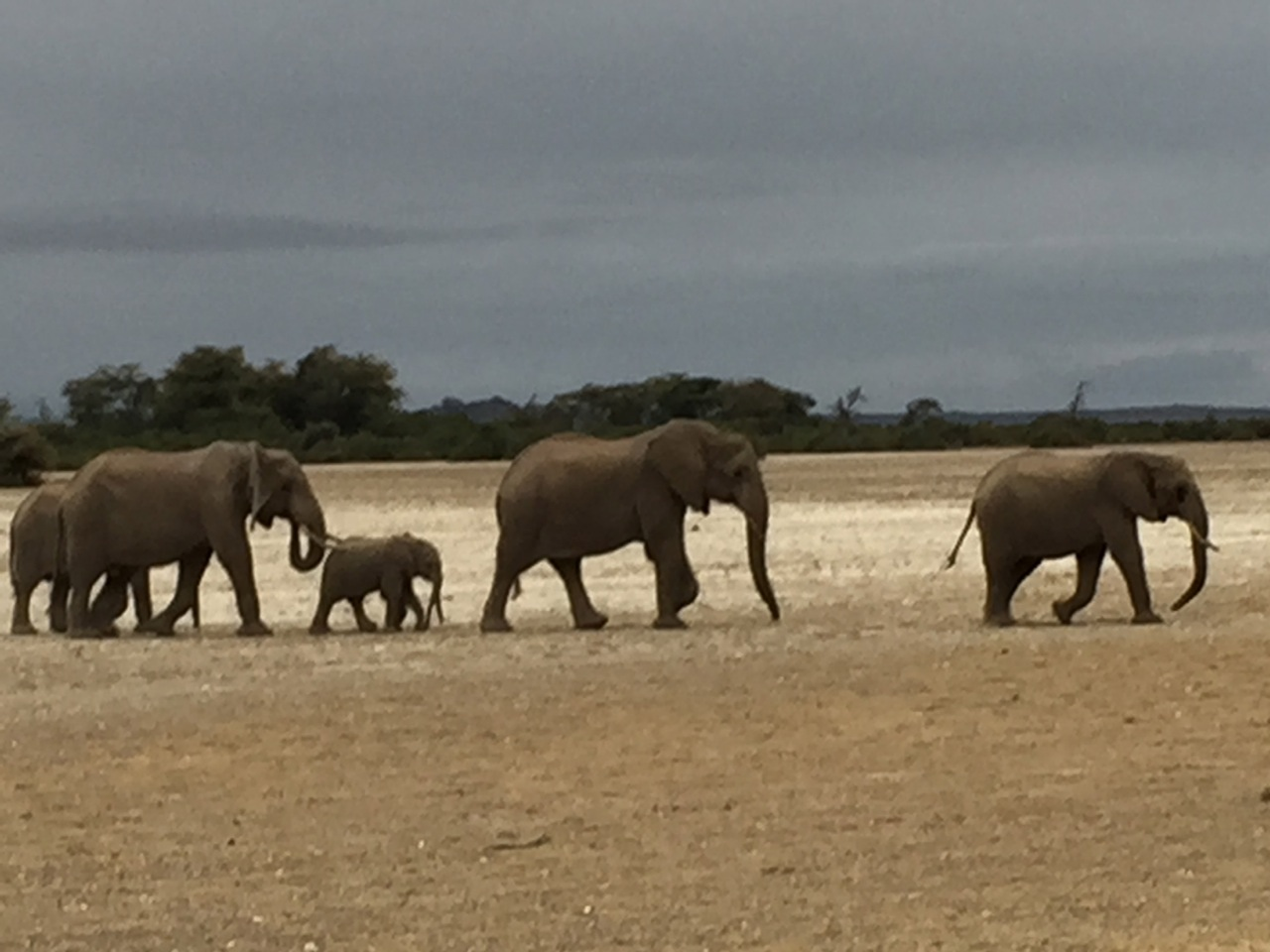 Elephant herd I photographed from our safari vehicle in the foothills of Mt. Kilimanjaro.