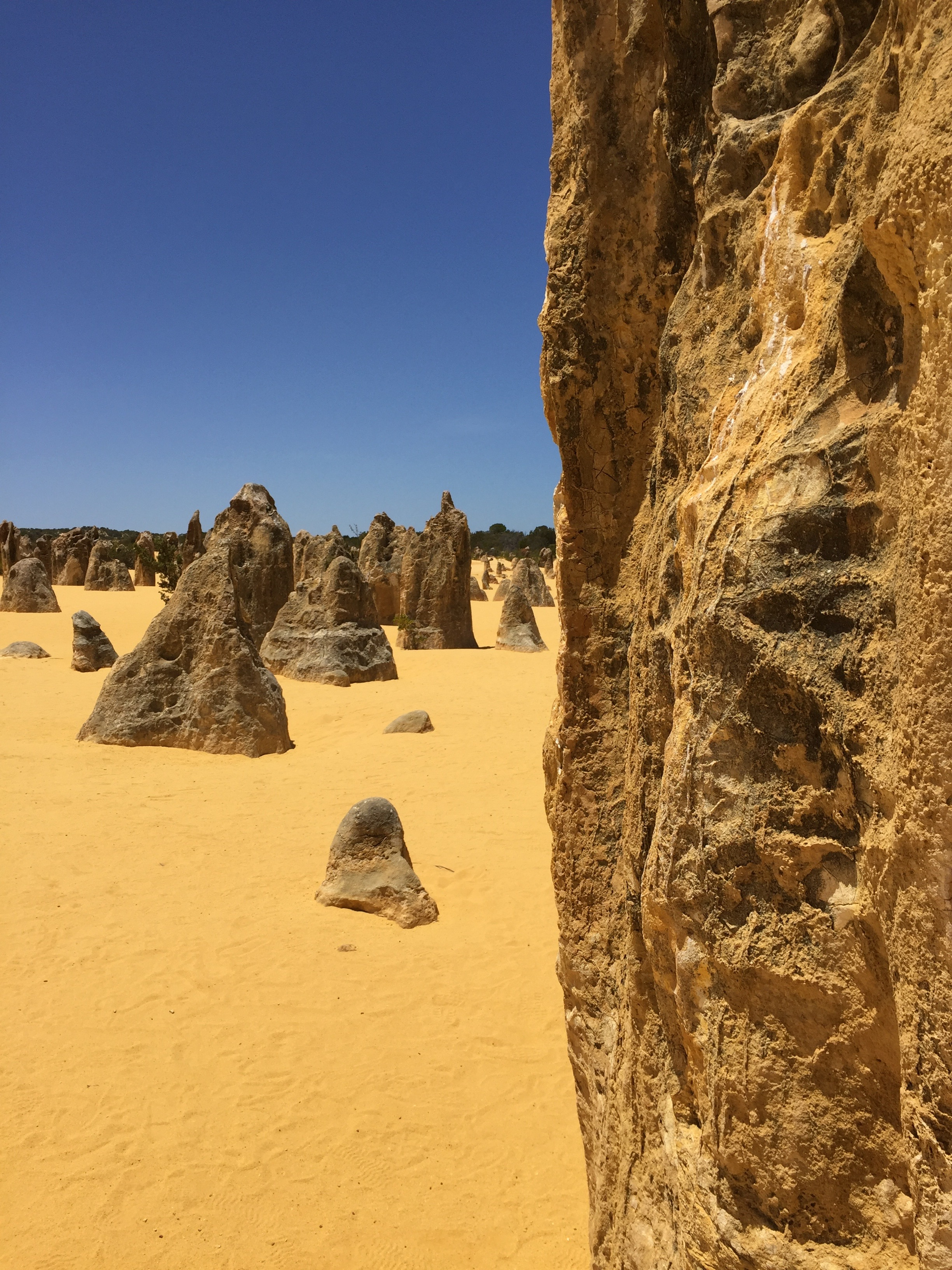 Limestone columns rise from the yellow dunes of Pinnacles in Nambung National Park (photo by Betsy Herbert)
