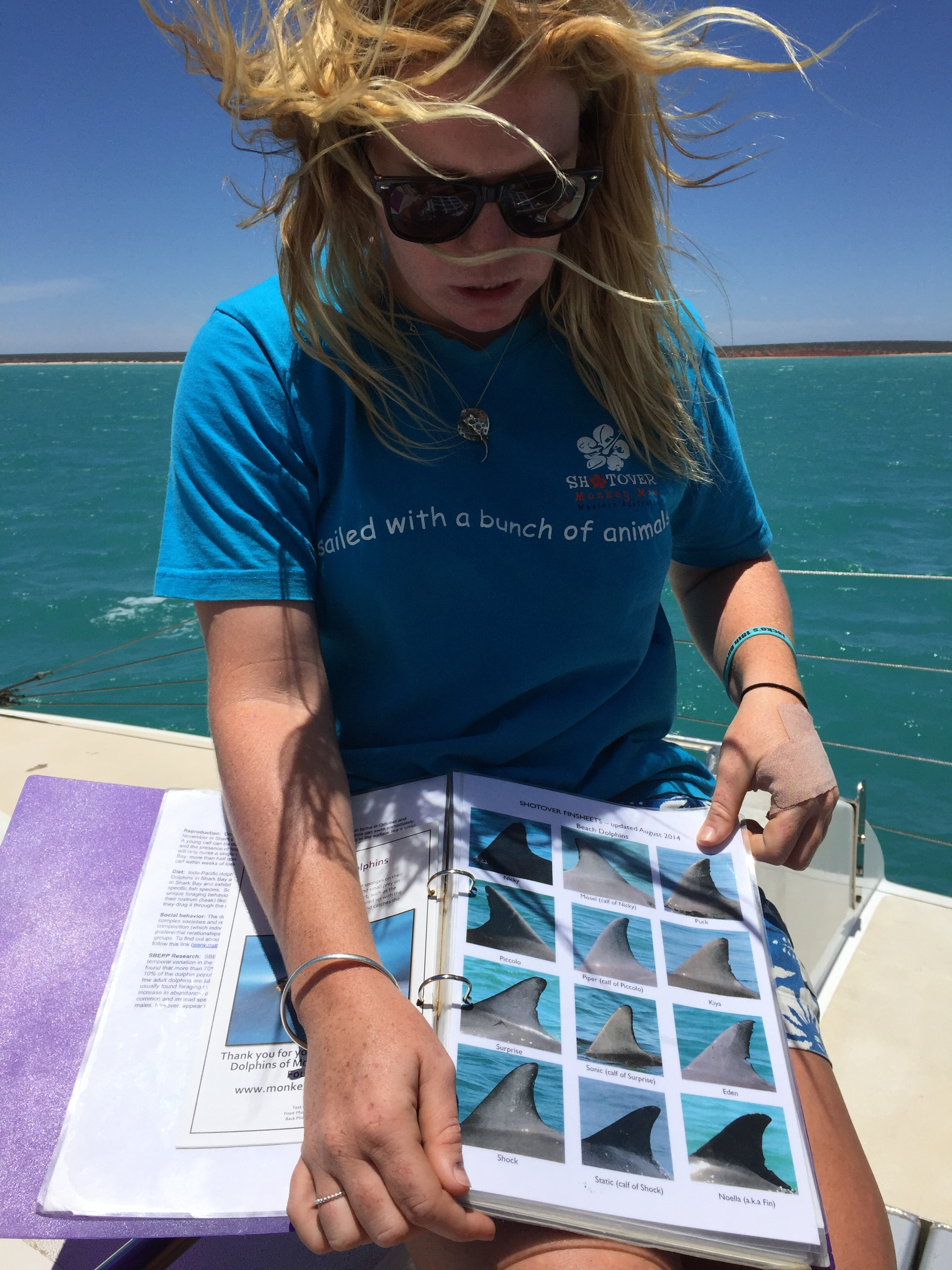 First mate Kate, aboard Shotover, a 60 foot catamaran, knows all the resident Shark Bay dolphins by name and by the unique shapes and scars on their dorsal fins.
