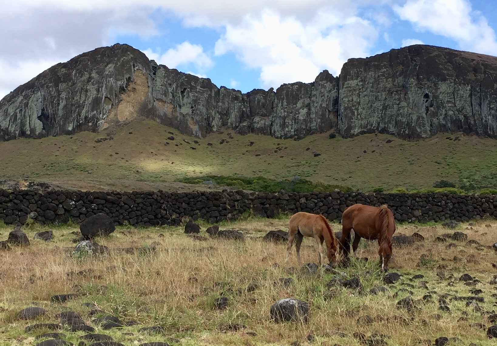Little remains of the original forest cover on Easter Island. Scientists know that it was once heavily forested, but the mystery remains as to how it got that way. Was it humans or rats that were primarily responsible?