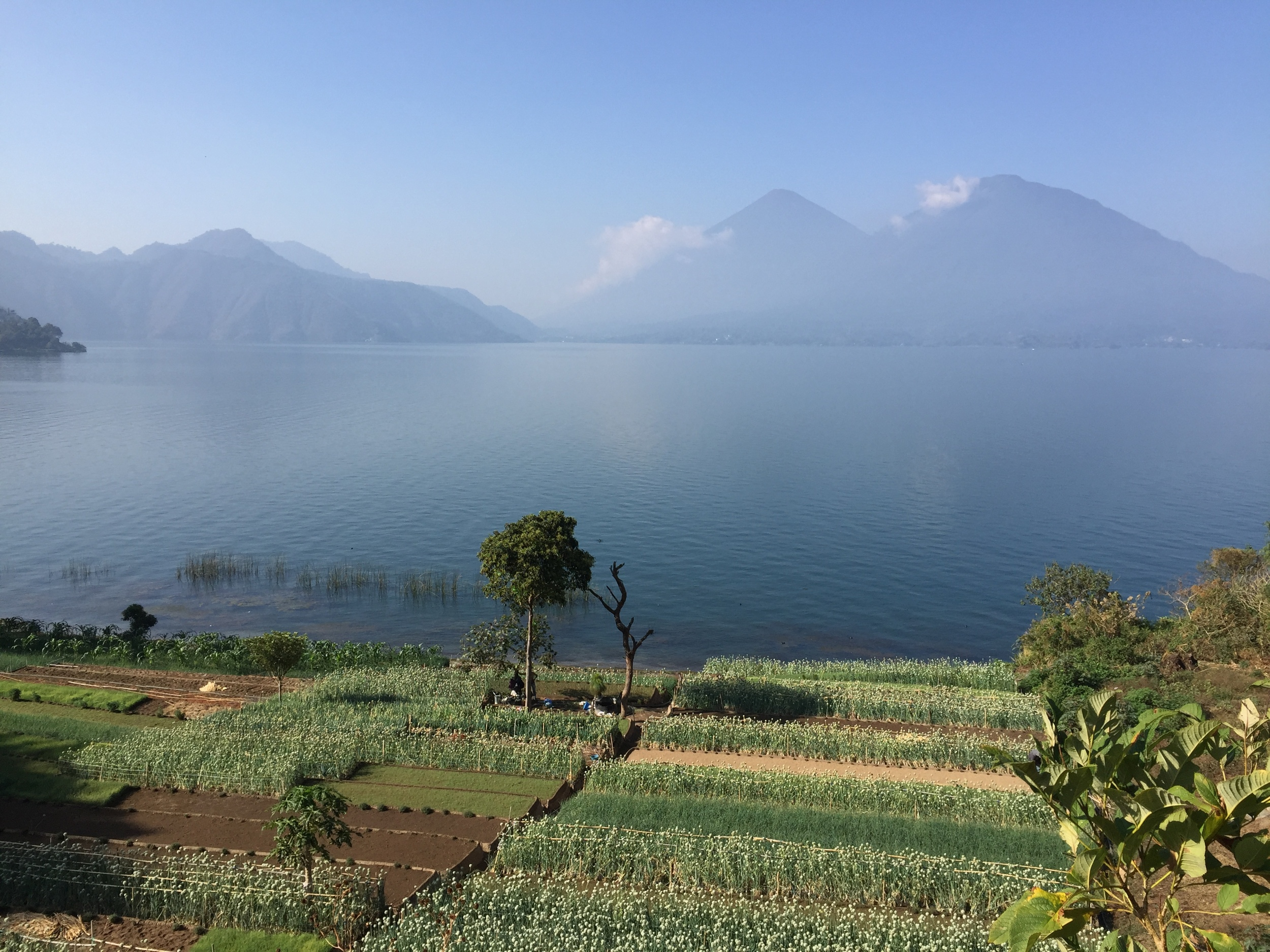 Vegetable farm along the edge of Lake Atitlan...you can see volcanoes in the background.