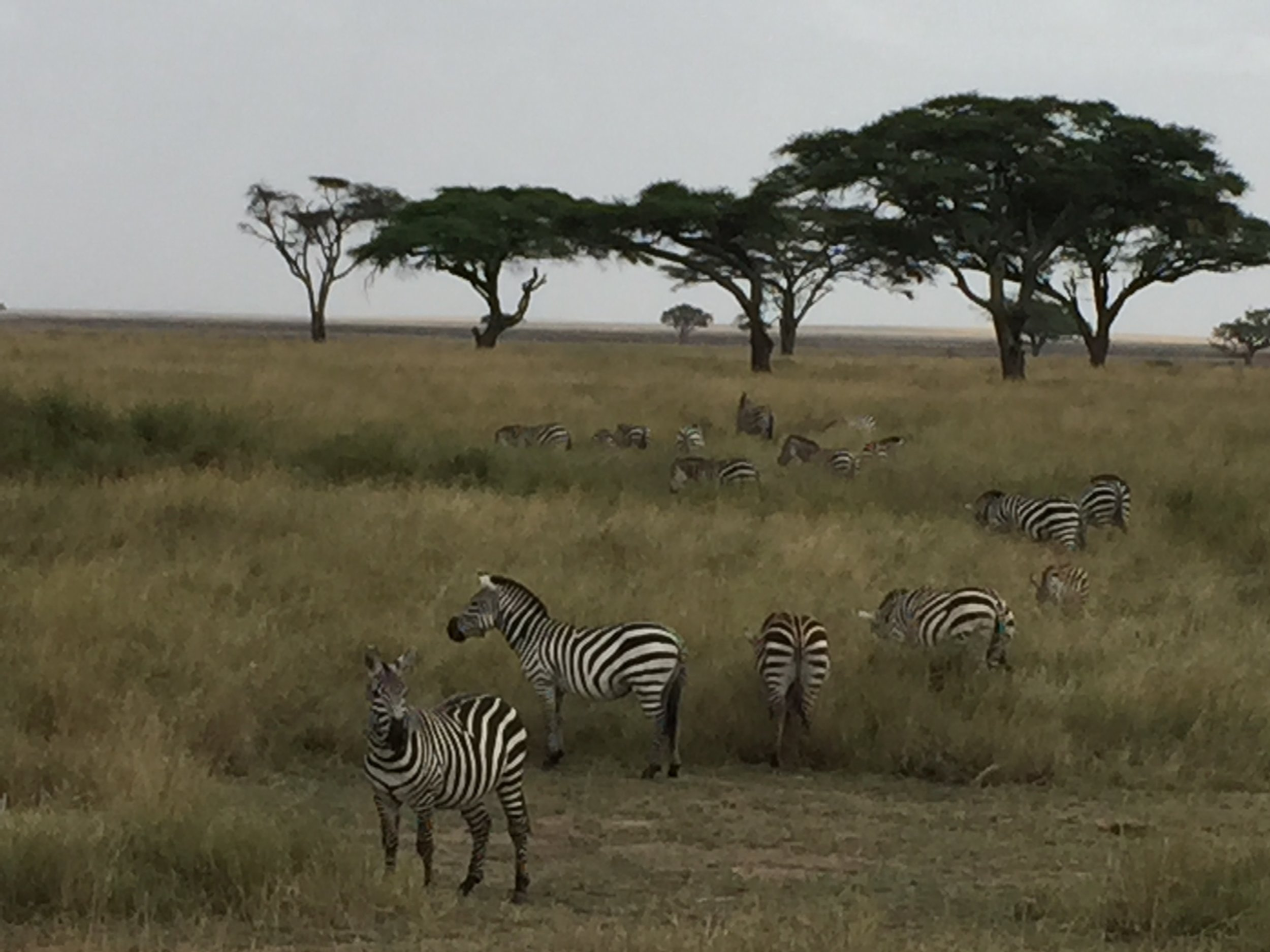 Serengeti National Park in Tanzania. Photo by Betsy Herbert 2015